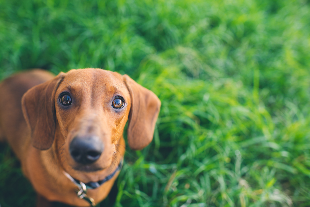 Is Advantage Safe For Small Dogs